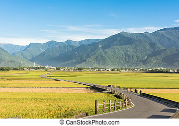 paddy farm and country road