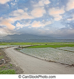 rural scenery with path