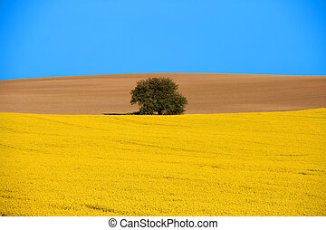 Spring landscape. Blooming canola field, bare brown field and a lone tree with blue sky.
