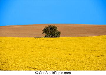 Rural scenic landscape - Spring landscape. Blooming canola...