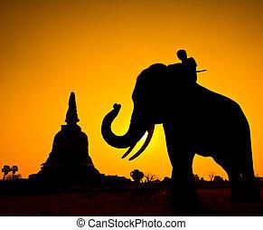rural, silhuetas, elefante, tailandia