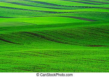 Rural spring landscape with green stripy fields and waves,...
