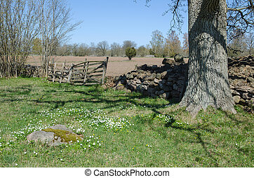 Rural springtime