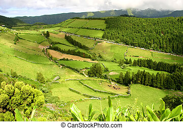 rural landscape in azores island of sao miguel