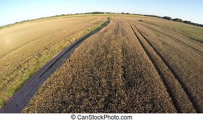 Rural summer end landscape with gravel road, aerial view -...