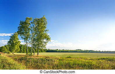 rural summer landscape. panorama with sunrise