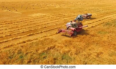 Rural Tractor With Trailer And Combine Standing In The Field Of Wheat