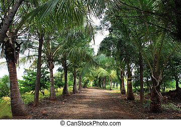 Rural Tropical Road