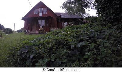 Rural village homestead house and rain drops fall on creeper plant. 4K