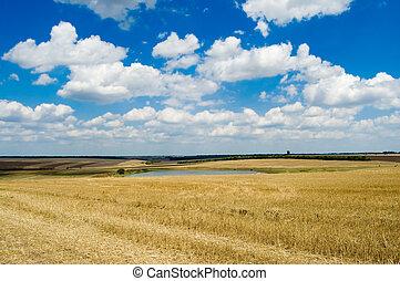 rural, vista