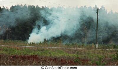 rural, vue, forêt, brûlé, secteurs