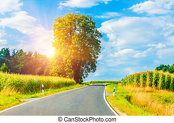 Rural winding road in sunset