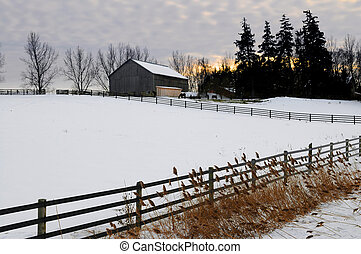 Rural winter landscape - Farm with a barn and horses in ...
