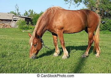 Rural workhorse