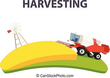 rurale, estate, paesaggio, con, rosso, mietitrebbiatrice, agricoltura, macchina, raccolta, dorato, maturo, frumento, field.