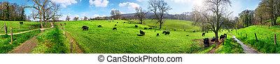 rurale, idilliaco, paesaggio, panorama