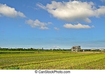 rurale, scenario