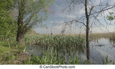 Rush Meadow Marsh at Twilight - Rush meadow marsh at...