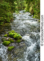 Rushing mountain stream in the forest