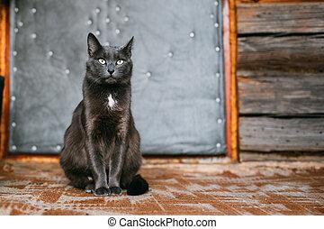 ruso, gato azul, gatito, reclinación encendido, pórtico, de, un, viejo, aldea, rústico