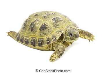 tortoises on a white  background