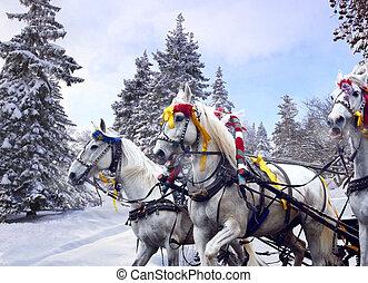 russe, chevaux, hiver, Trois