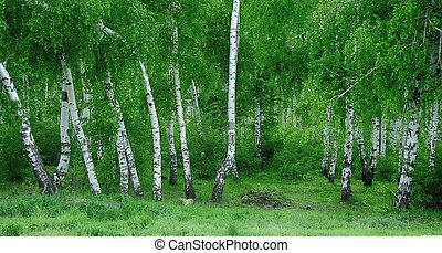 russe, forêt