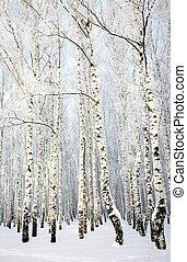russe, hiver, -, bouleau, bosquet, sur, ciel bleu, fond