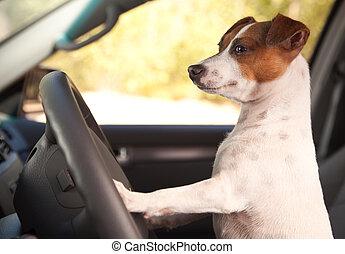 russell, auto, reiten, wagenheber, genießen, terrier