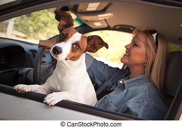russell, coche, paseo, gato, el gozar, terrier
