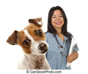 russell, derrière, vétérinaire, cric, femme, terrier