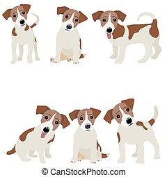 russell, perro, ilustración, vector, gato, terrier.