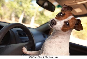 russell, voiture, cavalcade, cric, apprécier, terrier