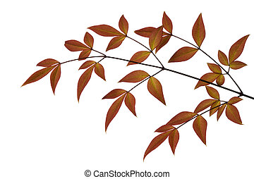 Russet-toned leaves, isolated on white background.