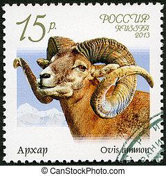 RUSSIA - CIRCA 2013: A stamp printed in Russia shows argali...