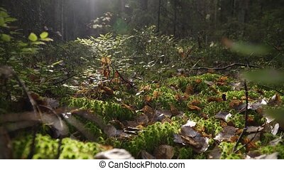 Picturesque landscape of the autumn forest of the Leningrad ...
