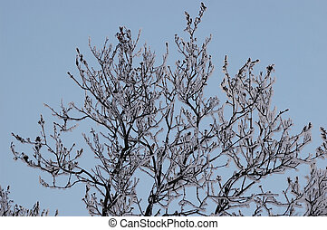 Branches in hoarfrost