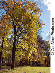 Russia,Gatchina, bright autumn tree in park