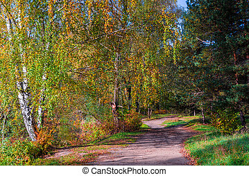 Russian autumn landscape in the park in September