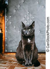 Russian Blue Cat Kitten Resting On Porch Of An Old Village Rustic