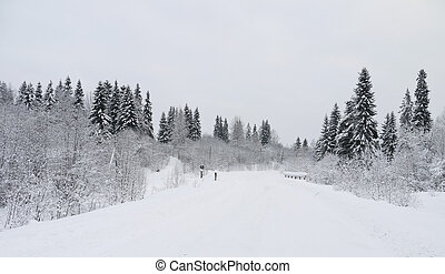 Russian forest in winter