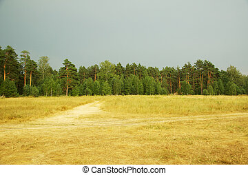 russian forest