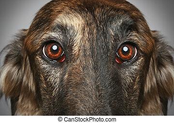 Russian greyhound. Close-up portrait on grey background