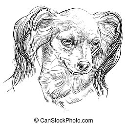 Russian long-haired toy Terrier vector hand drawing portrait