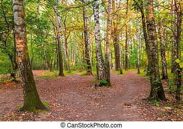 Russian mixed forest with beautiful birches