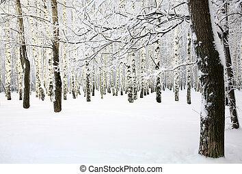 Russian winter in Birch Grove