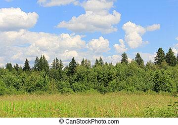 russo, floresta