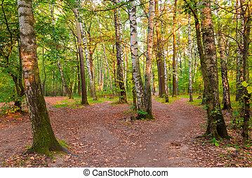 russo, misturado, floresta, com, bonito, vidoeiros