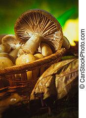 russula mushrooms in a wicker basket close up