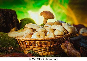 russula mushrooms in a wicker basket close-up